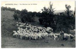 60 AUTEUIL LES MOUTONS SUR LA COLLINE - France