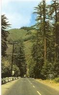 CALIFORNIA-BIG SUR: POSTCARD BIG SUR: HIGHWAY 1 HERE WINDS ITS WAY THROUGH THE HEART OF BIG SUR.GECKO. - Big Sur