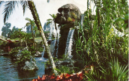 POSTCARD DISNEYLAND THE PIRATE'S COVE. SKULL ROCK AT PIRATE'S CAVE IN A LUSH TROPICAL SETTING.  GECKO. - Disneyland