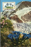 Romania, Maximum Card, Plants, Flowers, Gentiana Excisa - Flora