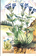 Romania, Maximum Card, Plants, Flowers, Gentiana Phlogifolia - Flora