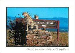 Mara Serena Safari Lodge Leopards Kenya Postcard Used Posted To England 2000 Stamp - Kenya