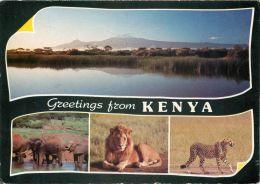 Elephants, Lion, Cheetah, Kenya Postcard Used Posted To UK 1987 Stamp Orchid - Kenya