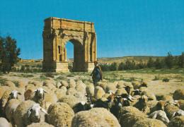 Sbeïtla Ruines Romaines. - Tunisie