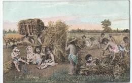 Bébés/ Carte Humoristique/La Moisson / Les Andelys/Eure/ Aqua Photo/ Paris / Vers 1910   HUM3 - Humorkaarten