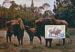 D15903 CARTE MAXIMUM CARD TRIPLE 1974 FRANCE - EUROPEAN BISON CP ORIGINAL - Animalez De Caza