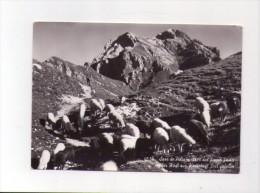 Cartolina Sass De Putia Dal Passo Poma (Dolomiti) Timbro Club Alpino Italiano 1974 - Italie