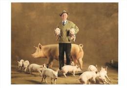 CARTE POSTALE : TRUIE LARGE WHITE ; COCHON ; PHOTO (C) YANN ARTHUS BERTRAND PARIS 1994 - Illustrateurs & Photographes