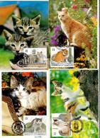 Belgique: CM Du N° 2521/4  Chats Européens  Obl: 05/09/1993 - Hauskatzen