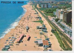 (ACA28) PINEDA DE MAR - Barcelona