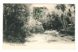 CPA MALAISIE - PENANG : A Country Plantation (1909) - Malaysia