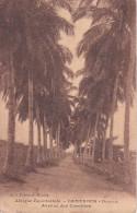 CPA Cameroun - Douala - Avenue Des Cocoliers (1974) - Kamerun