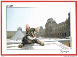 Paris - Chat Chaton Cat - Photographer Shinjiro Sagara ( 2 Scans ) France - Chats