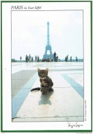 Paris - Chat Chaton Cat Cats Chats ( 2 Scans) - Chats