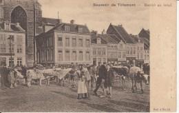 TIENEN / TIRLEMONT :  Dierenmarkt - Tienen