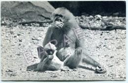 Parc Zoologique Du Bois De Vincennes - Gibbon Et Son Petit - Singes