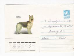 Sowjetunion 1989 GA Cover  Hund Dog Deutscher Schäferhund - Hunde