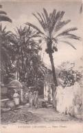 Carte Postale Ancienne - Paysages Sahariens - Dans L'oasis - Otros