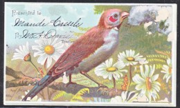 TEACHERS  REWARD  CARD  1880's  FAUNA  BIRD - Advertising