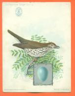 """Grand Chromo Singer Series  """" Oiseau Wood Thrush - Machine A Coudre Spain """"  2 Scans - Cromos"""