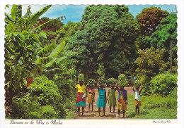 ANTIGUA  Bananas On The Way To Market - Antigua & Barbuda