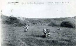 De Granville Au Mont-Saint-Michel - Carolles - Sur L'ancien Port Du Lude - France