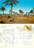Oasis, Libya Postcard Posted 1966 Stamp - Libya