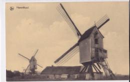 HERENTHOUT : Moulins - Molen - Herenthout
