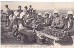 23496 Vendanges Et Travail Du Vin En Champagne Les Cloyettes  -LL 16 France Raisin -