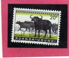 RUANDA URUNDI 1959 1961 FAUNA CAPE BUFFALOES ANIMAL ANIMALE BUFALO DEL CAPO CENT. 20c USATO USED OBLITERE' - Ruanda