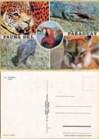 Ak  Paraguay - Fauna - Papagei - Krokodil - Großkatzen - Paraguay