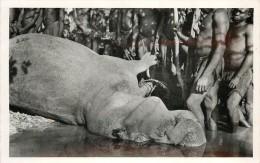 Réf : AAE14 -430 : Hippopotame Chasse Au Niger - Hippopotames