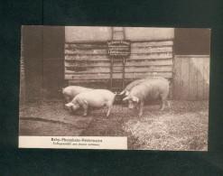 Beauval  (80) - Baby Phosphate Veterinaire Indispensable Aux Jeunes Animaux ( élevage Cochon Cochons L. Carton ) - Beauval