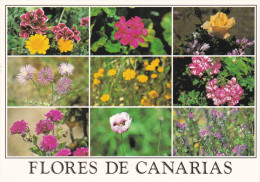 España--Tenerife--Flores De Tenerife--Franqueo Gloucester - Flores