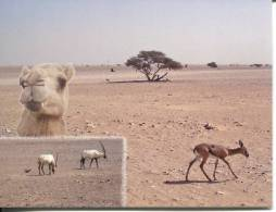 1 X UNESCO World Heritage Site - Oman - Arabian Oryx Sanctuary (delisted In 2007) - Oyrx - Camel - Gazelle - Bustard - Postcards