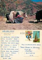 Sherpa Girl And Yak, Nepal Postcard Posted 1981 Stamp - Nepal