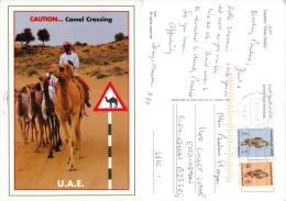 Camel Crossing, UAE Postcard Posted 2006 Stamp - United Arab Emirates