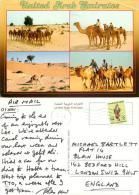Camels, UAE Postcard Posted 1991 Stamp - United Arab Emirates