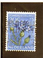 B- 1952 Paesi Bassi - Fiori - Period 1949-1980 (Juliana)