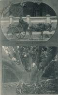 ANTILLES - BERMUDES - BERMUDA - Vegetable Seller & Rubber Tree - Ecrite à PORT HAMILTON En 1906 - Bermudes