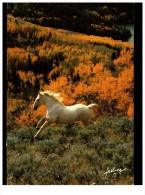 Lots De Chevals 16 Cartes - Cartoline