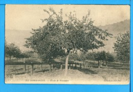 CP, EN NORMANDIE, Etude De Pommiers, Vierge - Basse-Normandie