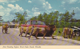 Florida West Palm Beach Lion Country Safari Curteich