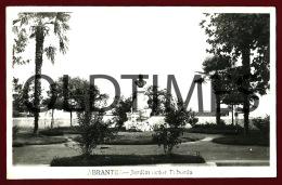 ABRANTES - JARDIM ACTOR TABORDA - 1950 REAL PHOTO PC - Santarem