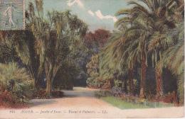 CPA Alger - Jardin D'Essai - Yuccas Et Palmiers - 1917 (2417) - Norwegen