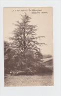 69 - LA SAUVAGERE - MILLERY - (Rhône) - Le Cèdre Géant - Arbre Homme - X. Goutagny Edit - Fleurs, Plantes & Arbres