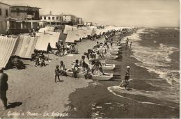 EMILIA ROMAGNA - GATTO A MARE  (RIMINI) -  La Spiaggia - Rimini