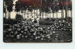 COLOMBO - Plantation De Noix De Coco (carte Photo). - Sri Lanka (Ceylon)
