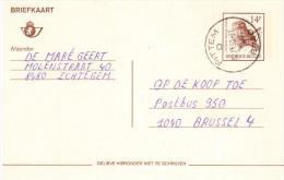 Belgio - Stationery Card Entier Ganzsache, 14f. Owl, Hibou, Civetta Eule - Gufi E Civette