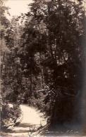 ARGENTINA-BARILOCHE: POSTCARD A PATH IN THE FOREST. UN CAMINO EN EL BOSQUE. CIRCULATED 1925.  GECKO. - Argentine